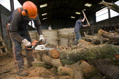 Farmworkers cutting up trees for firewood on a farm in Warwickshire - John Harris - 12-10-2009