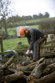 Farmworkers cutting up trees for firewood on a farm in Warwickshire - John Harris - 2000s,2009,agricultural,agriculture,by hand,chainsaw,chainsaws,country,countryside,cut,cutting,dust,dusty,ear,Ear Protectors,EARNINGS,EBF,Economic,Economy,employee,employees,Employment,EQUALITY,Eye Pr