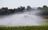 Irrigation of salad crops by traveling sprinkler, Warwickshire. - John Harris - 2010,2010s,agricultural,agriculture,capitalism,capitalist,country,countryside,crop,crops,EBF,Economic,Economy,farm,farmed,farming,field,fields,grow,grower,growers,growing,HORTICULTURAL,horticulture,In