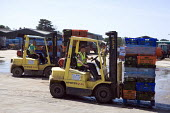 Migrant workers driving forklift trucks and moving palettes, lettuce production on a farm in Warwickshire - John Harris - 28-06-2010