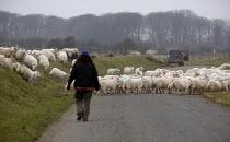 Moving sheep, Pembrokeshire, Wales - John Harris - 05-03-2011