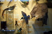 Disply of birds including a kingfisher, The Natural History Museum, Oxford. - John Harris - 03-03-2012