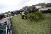 Silage making on a farm, filling and rolling the silage heap or clamp with a JCB wheeled loading shovel, Wormleighton, Warwickshire - John Harris - 2010s,2012,agribusiness,agricultural,agriculture,capitalism,capitalist,contractor,contractors,crop,crops,driver,drivers,driving,EBF,Economic,Economy,employee,employees,Employment,farm,Farm Worker,farm