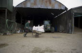 A farmworker moving sacks of animal feed (for beef cattle) across a farmyard using a wheelbarrow, Wormleighton, Warwickshire - John Harris - 22-05-2012