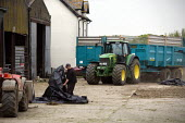 A farmworker preparing the black plastic sheets to cover the silage heap or clamp as a tractor and trailer drive into the famyard. Silage making on a farm, Wormleighton, Warwickshire - John Harris - 22-05-2012