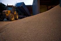 Wheat grain dryer reducing the moisture content, Larkstoke Farm, Warwickshire - John Harris - 2010s,2012,agricultural,agriculture,capitalism,capitalist,cereal crop,crop,crops,drying,dusk,EBF,Economic,Economy,employee,employees,Employment,evening,farm,farmed,farming,farmland,farms,farmyard,farm