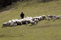 A farmworker and lambs, Llanarmon, North Wales - John Harris - 15-04-2013
