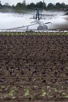 Irrigating a salad crop with a sprinkler on a farm in Warwickshire. - John Harris - 18-05-2013