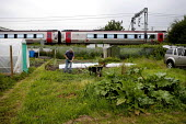 Elderly man tending his vegetable patch, hoeing weeds on an urban allotment as a train goes by. Stafford. - John Harris - 18-06-2013