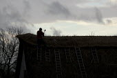 A thatcher at work on the roof of a thatched cottage, Stratford upon Avon, Warwickshire. - John Harris - LBR,2010s,2013,cottage,cottages,craft,craftsman,EBF,Economic,Economy,employee,employees,Employment,housing,job,jobs,LBR,people,roof,roofer,roofers,roofs,rooftop,rooftops,skilful,skill,skilled,skillful