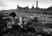 Riddling coal - picking coal from the waste of the closed and derelict Elsecar Main colliery, South Yorkshire - John Harris - 13-12-1984