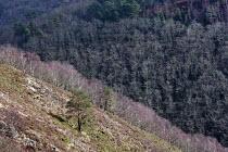 Whiddon Wood, Dartmoor, Devon - John Harris - 25-02-2014