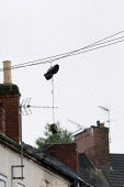 A pair of trainers hanging from a phone line, Humberstone, Leicester - John Harris - 04-06-2014