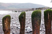 Porlock Weir, Somerset - John Harris - 2010s,2014,beach,BEACHES,coast,coastal,coasts,costal defences,costal Erosion,country,countryside,eni,environment,Environmental Issues,eroded,erosion,groyne,groynes,nature,OCEAN,outdoors,outside,Porloc