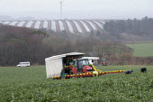 Harvesting cauliflowers in the rain, Cornwall - John Harris - 27-03-2015