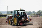 Seeding and rolling a salad bed, Warwickshire - John Harris - 11-06-2015