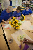 Art class, pupils drawing sunflowers. Primary school, St Richards First School, Evesham, Worcestershire - John Harris - 2010s,2015,art,boy,boys,child,CHILDHOOD,children,draw,drawing,juvenile,juveniles,kid,kids,male,people,pupil,pupils,school,schoolchild,schoolchildren,SCHOOLS,student,students,sunflower,sunflowers,unifo