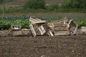 Wooden vegetable boxes for pickers in a field, Vale of Evesham, Worcestershire - John Harris - 25-06-2015