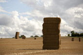 Stack of hay bails Warwickshire - John Harris - 2010s,2015,agricultural,agriculture,arable,bale,bales,capitalism,capitalist,crop,crops,EBF,Economic,Economy,farm,farmed,farming,farmland,farms,field,fields,grower,growers,growing,hay,HORTICULTURAL,hor