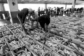Fish buyers at Concarno Fish market France the largest fishing port in Europe. Over fishing is blamed for the depletion of fish stocks - John Harris - 19-07-1983