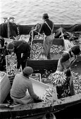 Fishermen unloading their catch at Concarneau Fishing port, France, the largest fishing port in Europe. Over fishing is blamed for the depletion of fish stocks - John Harris - 19-07-1983