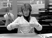 Forensic scientist examining underwear for semen in a rape case. Police forensic laboratory Birmingham - John Harris - 1980s,1989,adult,adults,Applied,Birmingham,cities,city,CLJ crime,detection,Evidence,examining,female,job,jobs,LAB LBR work,MATURE,people,person,persons,Police,POLICING,rape,science,SCIENCES,scientist,