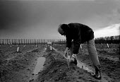 Horticultural scientist cutting asparagus on a trial plot in the rain. ADAS Experimental Horticulture Station Luddington - John Harris - 1980s,1989,AGRICULTURAL,agriculture,capitalism,capitalist,crop,crops,cutting,EBF economy business,experiment,farm,farmed,farming,furrow,grower,growers,HORTICULTURAL,Horticulture,Industries,industry,ip