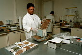 Handling samples in ADAS laboratory  ... - John Harris - 1990s,1996,Applied,BAME,BAMEs,black,BME,bmes,diversity,ethnic,ethnicity,female,Handling,HORTICULTURAL,Horticulture,job,jobs,LAB LBR work,minorities,minority,people,person,persons,poc,research,samples,