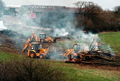 Contractors ripping out and burning hedgerow and trees from a stream and meadow to make way for construction of a road and industrial development. 150,000 miles of hedgerow, essential to native birds,... - John Harris - ,1990s,1999,animal,animals,belt,bird,birds,bonfire,bonfires,brook,building,BUILDINGS,BURN,burning,BURNS,Construction Industry,country,countryside,DESTROYED,destruction,developer,developers,development