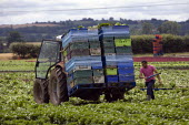 Tractor driver adjusting the load of harvested lettuce, in a field in Warwickshire - John Harris - 27-07-2011
