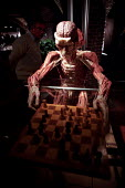 Whole human plastinated body with brain exposed plays chess at the controversial Korperwelten art exhibition, by Prof. Gunther Von Hagens MD, Brussels, Belgium. - Jess Hurd - 12-12-2001