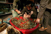 Young Chinese street vendor sells crabs. Old Town Ghost Market, Shanghai, China. - Jess Hurd - 2000s,2003,bought,buy,buyer,buyers,buying,Chinese,cities,city,commodities,commodity,consumer,consumers,crab,crabs,crustacea,CRUSTACEAN,crustaceans,customer,customers,EARNINGS,EBF economy,food,FOODS,go