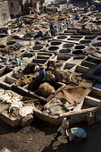 Poor working conditions in the Marrakech tanneries, where leather is washed and dyed, Morocco. - Jess Hurd - 12-01-2008