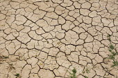 Parched desert earth. Imperial County, California. USA. - Jess Hurd - 05-07-2008