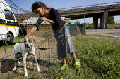 Roma Gypsy camp underneath a motorway flyover in South West Rome, Italy. - Jess Hurd - 2000s,2008,adolescence,adolescent,adolescents,animal,animals,BAME,BAMEs,BME,bmes,camp,camps,canine,child,CHILDHOOD,children,communities,community,diversity,dog,dogs,EQUALITY,ethnic,ethnicity,eu,Europe