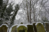 Snow in Tower Hamlets Cemetery Park London. A nature reserve. - Jess Hurd - 02-02-2009
