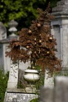 Dead Xmas tree on a grave, Tower Hamlets Cemetery Park, East London. - Jess Hurd - 16-07-2007