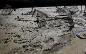 Abandoned, washed up shopping trolleys on the River Thames. London. - Jess Hurd - 29-05-2009