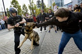 Anti fascists are attacked by police dogs. English Defence League march in Manchester countered by Unite Against Fascism. - Jess Hurd - 10-10-2009
