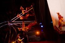 Artists perform at the Cirque du Soleil - Varekai - Royal Albert Hall, London. - Jess Hurd - 2010,2010s,ACE Arts Culture & Entertainment,circus,cities,city,performance,performer,performers,performing,urban