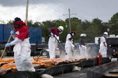 Lafitte Oil Response Team with inadequate protective clothing cleaning oil booms. Bayou Barataria. BP oil spill dawn clean up operation. Grand Isle beach, Louisiana. USA. - Jess Hurd - 21-08-2010