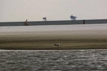 BP Gulf Oil disaster. Dauphin Island beach oil slick and seagull, Alabama. USA. - Jess Hurd - 17-08-2010