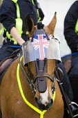 Police horse with a Union Jack. English Defence League disrupt a UK Uncut anti austerity, anti monarchy street party, Diamond Jubilee weekend, Brighton. - Jess Hurd - 02-06-2012