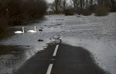 Flooding in Whittlesey, Fenland, Cambridgeshire. - Jess Hurd - 26-12-2012