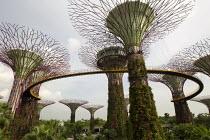 Supertree Grove, Botanical Gardens by the Bay. Marina Bay Sands luxury 5 Hotel. Singapore. - Jess Hurd - 22-10-2013