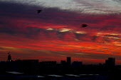 Dramatic swirling clouds and vivid winter sunset over Limehouse, East London. - Jess Hurd - 04-12-2013