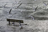 Thames flooding, Datchet, Surrey. - Jess Hurd - 2010s,2014,animal,animals,BAD,bench,bird,birds,CLIMATE,Climate Change,conditions,DIA,eni,environment,Environmental Issues,EXTREME,flood,flooded,flooding,floods,Global Warming,incident,incidents,nature