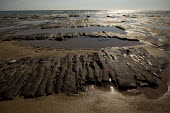 Tywyn beach, where storms revealed 6,000 year old ancient cut peat beds. Powys, Wales. - Jess Hurd - 18-06-2014