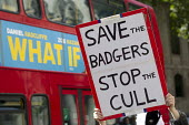 Save the badgers protest outside the Royal Courts of Justice against the badger cull. London. - Jess Hurd - 21-08-2014