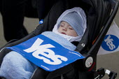 Polling Day in the Scottish Independence Referendum. The Yes campaign. George Square, Glasgow, Scotland - Jess Hurd - 2010s,2014,asleep,babies,baby,boy,boys,campaign,campaigning,CAMPAIGNS,chair,chairs,child,CHILDHOOD,children,democracy,EARLY YEARS,EXHAUSTION,Glasgow,independence,infancy,infant,infants,juvenile,juveni